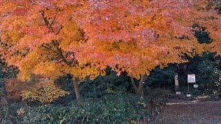 Beautiful 21st Century Forest Park and Random Exploration in Chiba | JAPAN LIVESTREAMS 2019