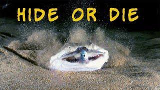 Camouflage in sea creatures - top 10 ways to hide in ocean - includes bonus angel shark sand ambush!