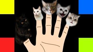 Finger Family Song - Cats Version
