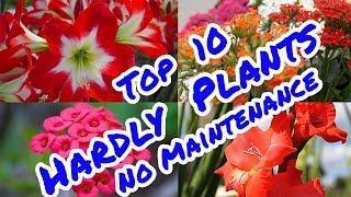 Top 10 Hardly  Plants  No  Maintenance # Galiff Street Plant Market ( Kokata )# No 1 Plant Market in