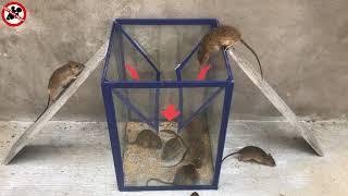 Membuat perangkap tikus mudah | Mouse Trap / Rat Trap | Top 10 elektrische Mausefalle