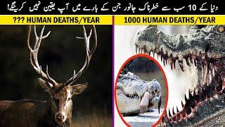Top 10 Most Dangerous Animals in The World - MalomatKLiye