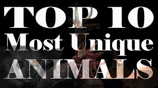 Top 10 Most Unique Animals In World You Never Knew Existed