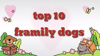 Top 10 family dogs/top 10 friendly dogs/hd video/golden retriver
