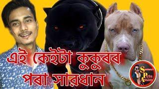Top 10 dangerous Dog breeds in the world || Santanu's Pets Assam