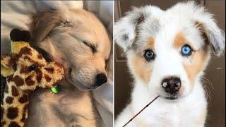 Cute baby animals Videos Compilation cutest moment of the animals 2020 - Soo Cute! #26