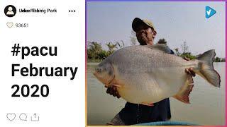 Top 10 #pacu Posts Starring: leksfishingparkudon
