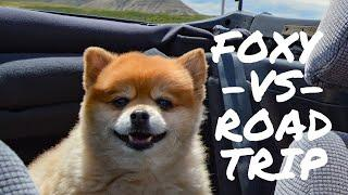 Top 10 travel Tips for Doggys (Road Trip Edition)