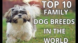 TOP 10 Dog breeds For Family in the World | family dog breeds | pets & animals point: