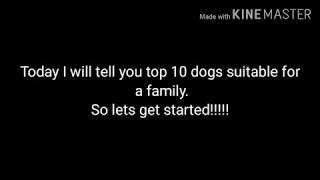 Top 10 dogs suitable for a family | Nivritti