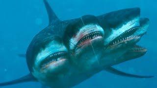 10 Most Rare Shark Species Hidden in The Ocean!