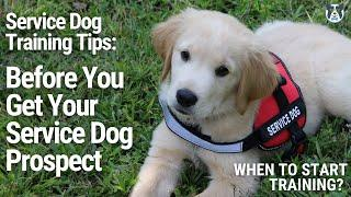 Watch BEFORE you get a SERVICE DOG! When To Start Training and more Service Dog Training Tips