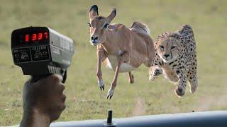 এখানে কার গতি বেশি দেখলে মাথা ঘুরে যাবে। fastest animals in the world in Bangla