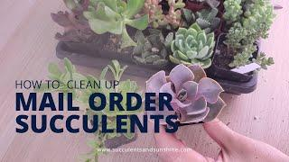 Cleaning Up Succulent Plant Mail