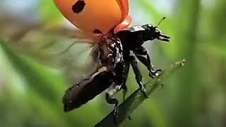 Top 10 Worst Bugs