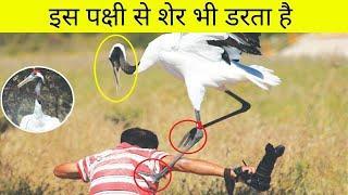 दुनिया के 10 सबसे खतरनाक पक्षी | Top 10 Dangerous Birds in the World