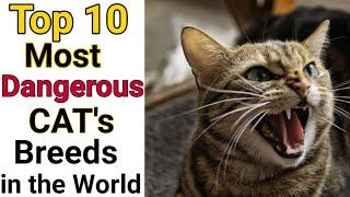Top 10 Most Dangerous Cats Breeds in the World/Country #Shorts #YoutubeIndia #theanimalpaw