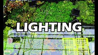 The BEST AQUARIUM LIGHTING for Your Aquarium Plants & WHY