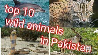 Top 10 Wild Animals in Pakistan||MILAWA Funny group
