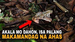 Top 10 mga hayop at insekto na magaling sa camouflage at pagpapanggap | Animal & Insect mimicry