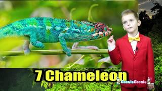 The Most Pretty Animals - Top 10 List for Kids - Fun Educational Videos for Children