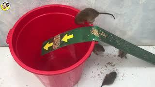 Top 10 Piège à souris | Membuat perangkap tikus mudah