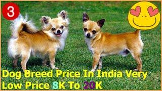 Dog market all breed information [ TOP 10 CUTE PUPPY BREEDS] { The SMALLEST DOG BREEDS in the World}