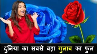 Amazing Facts In hindi Top 10 Facts Interesting Rose Facts || Fact Guru7 ||