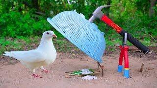 Top 10 Trending Bird Traps : Pigeon Bird Trap , Parrot Bird Trap