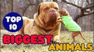 Top 10 Biggest Animals In World 2020-21 || Largest Animals In Word ||Top Facts In World || Mr.XJuTT