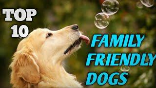 Top 10 FAMILY FRIENDLY DOGS[Family Safe Dogs]