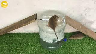 top 10 trampa para ratones nueva mejor idea trampa para ratones de agua top 10 trampa para ratascasa