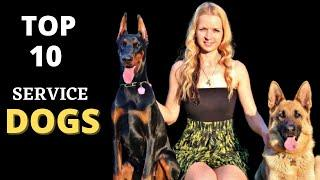 TOP 10 BEST SERVICE DOG BREEDS EVER || SERVICE DOGS