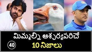 Top 10 Unknown Facts in Telugu | Interesting and Amazing Facts | Part 40| Minute Stuff