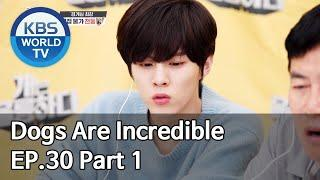 Dogs are incredible | 개는 훌륭하다 EP.30 Part 1 [SUB : ENG,CHN/2020.06.10]