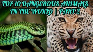 TOP 10 DANGEROUS ANIMALS IN THE WORLD | PART-2