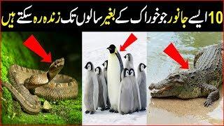 Top 10 Which Animal Can Live Without Food For Lifetime | The Urdu Information