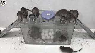 Top 10 Idea Mouse Trap | Best Electric Mouse/Rat Trap | Top 10 elektrische Mausefalle
