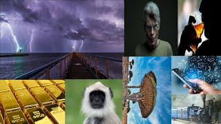 Top 10 Information (Giant Water Lily, Stephen King, Gray Langur, Dragon Blood Tree, Gold Piece etc.)
