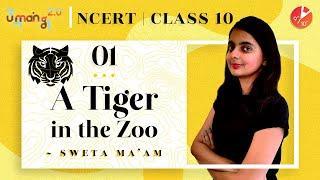 A Tiger in the Zoo Class 10 Explanation L1 | CBSE Class 10 English First Flight NCERT |Umang Vedantu