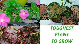 Top 10 toughest plant to grow||Common house plants name.