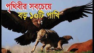 Top 10 Largest BIRDS Around The World    পৃথিবীর সবচেয়ে বড় ১০টি পাখি