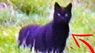 Top 10 Mythical Creatures & Cryptids 2020