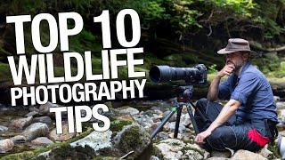 TOP 10 WILDLIFE PHOTOGRAPHY TIPS you must follow! how to become better wildlife photographer