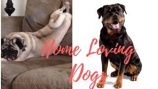 Top 10 Family Dogs I Part 1