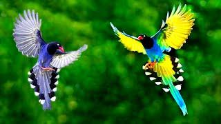 সবথেকে সুন্দর ২০টি পাখি | Top 20 Most Stunningly Beautiful Birds in the World | Amazing Birds
