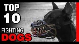 TOP 10 DOGS MOST LIKED BY MAFIA GANGSTERS    FACT INFORMATION
