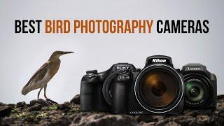 Top 5 Best Bridge Cameras for Bird Photography | Point & Shoot Cameras for Birding | Sonika Agarwal