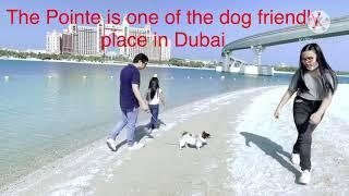 Unoh met new friends at The Pointe, Palm Jumeirah, Dubai. Top 10 dog friendly place in Dubai