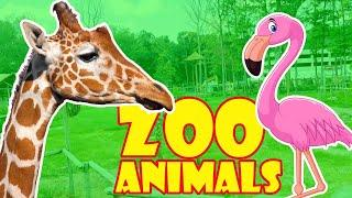 Zoo Animals Video for Kids - Emin's Top 10 Zoo Animals|Fun Animals for Children and Toddlers